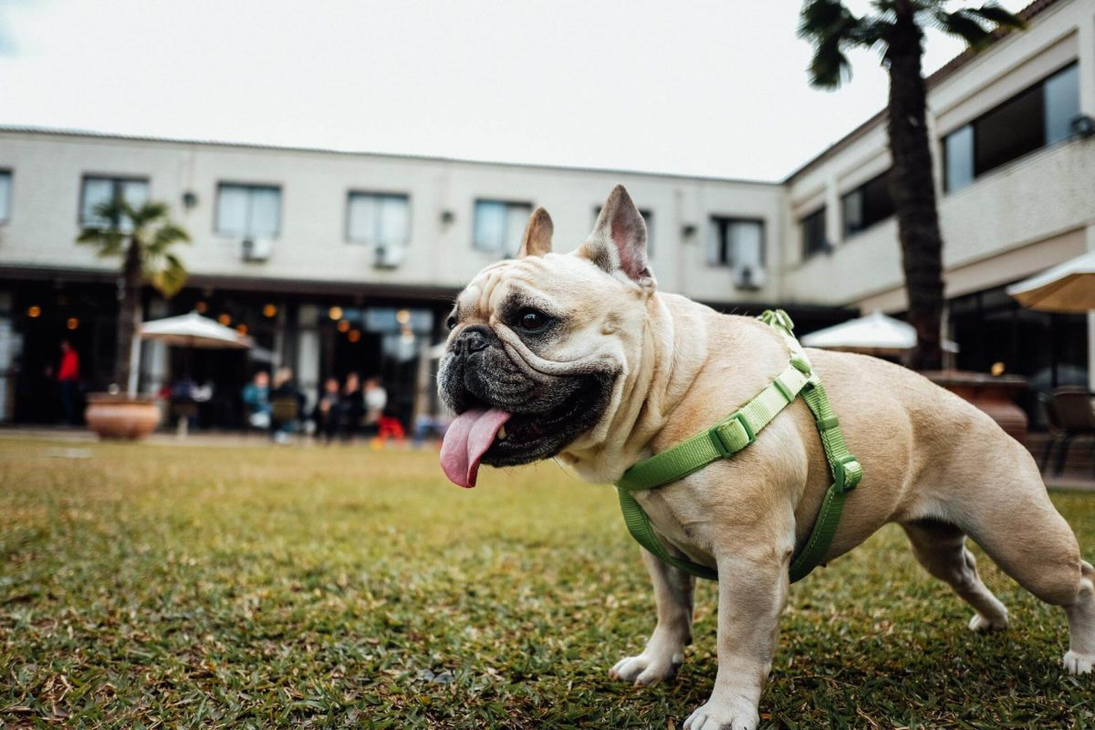 5 Tips To Choose the Best Dog Pulling Harness